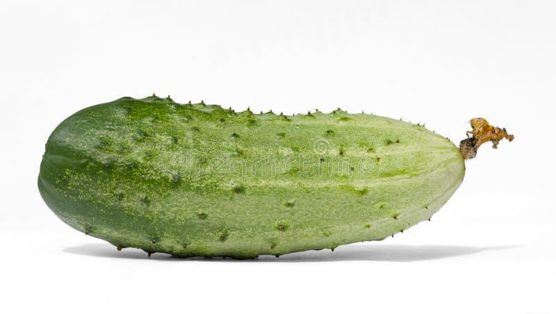 Fresh organic cucumber isolated on white background. royalty free stock image