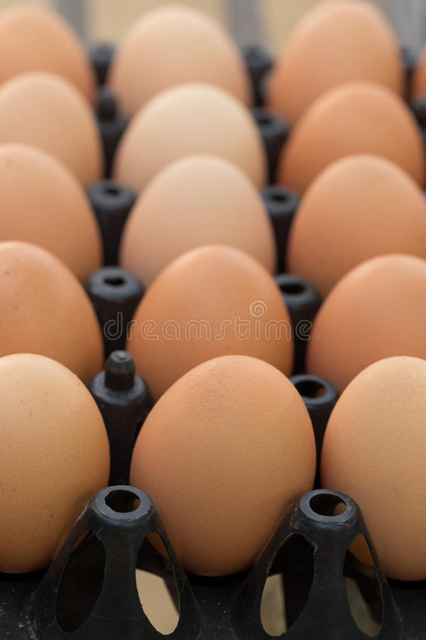 Fresh organic eggs from chicken farm agriculture. For sale at the market stock images