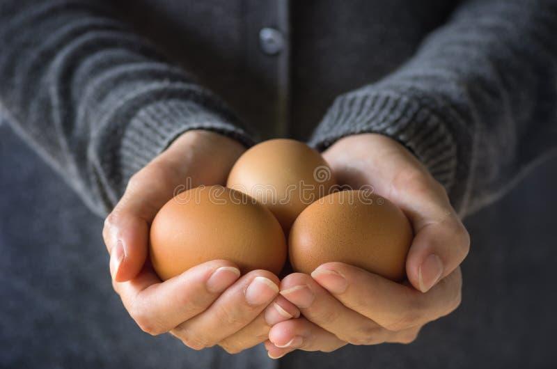 Fresh organic eggs. Fresh organic eggs on the hands of farmers stock photo