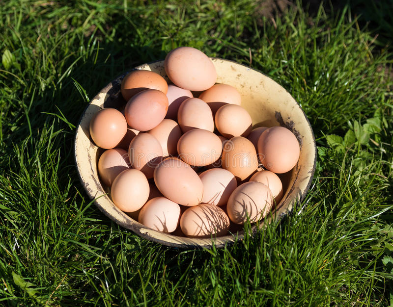 Fresh organic eggs. In the pot stock photography