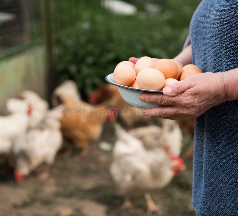Fresh organic eggs. Woman farmer holding fresh organic eggs stock image