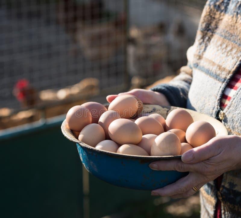 Fresh organic eggs. Woman holding fresh organic eggs royalty free stock images