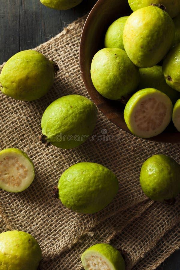 Download Fresh Organic Green Guava stock image. Image of ingredient - 41872575