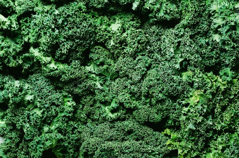 Fresh organic green kale background, selective focus, top view, copy space. Green texture royalty free stock photography