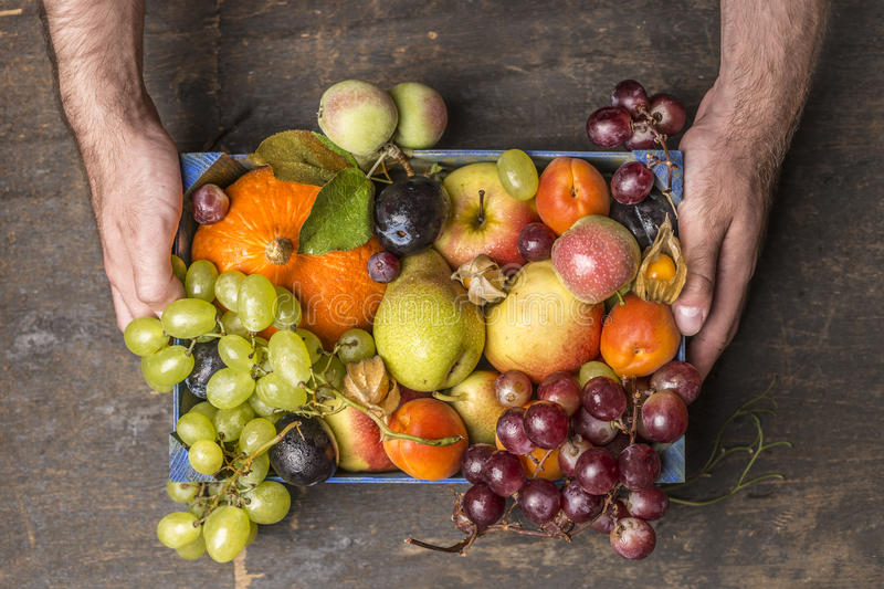 Fresh organic harvest fruits in wooden box in mans hands on dark rustic wooden background, top view. Fresh organic harvest fruits in wooden box in mans hands royalty free stock photos