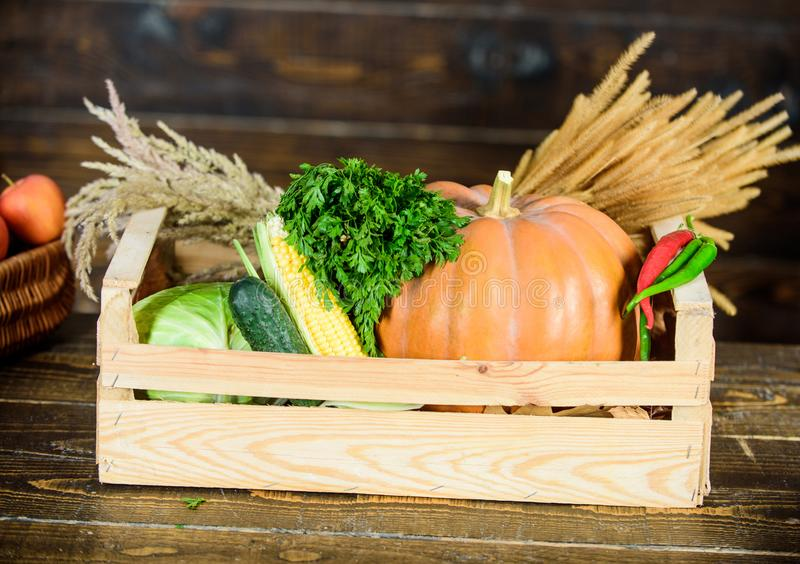 Fresh organic healthy vegetables garden box. Fall harvest concept. Autumn harvest crops vegetables. Locally grown. Natural food. Farmers market. Homegrown stock photo