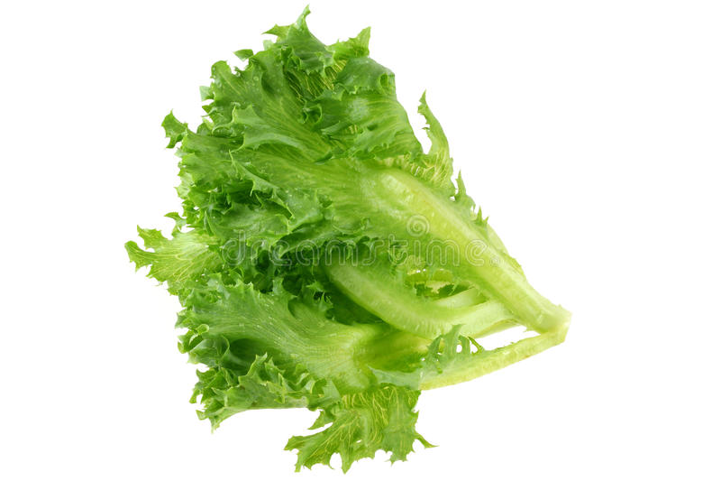 Fresh organic hydroponic Frille Iceberg Lettuce stock photos