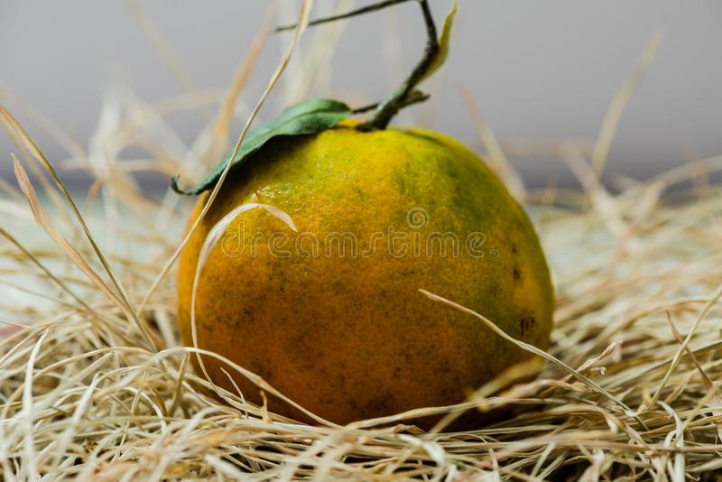 Fresh Orange fruits with grass. Fresh Organic Orange fruits with driied grasses royalty free stock photography