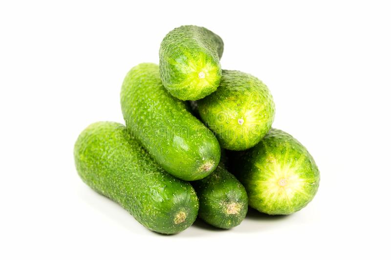 Fresh organic pickling cucumbers isolated on white background royalty free stock photography
