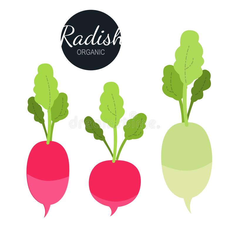 Fresh organic radish isolated on white background. royalty free illustration