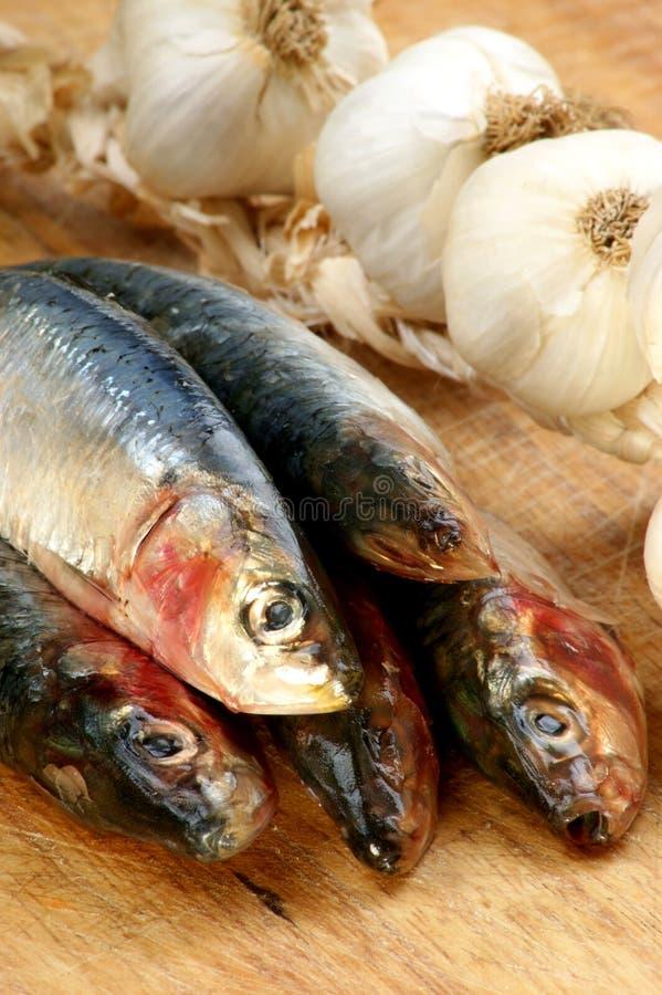Download Fresh Organic Sardine On A Timber Board Stock Photo - Image: 16368170