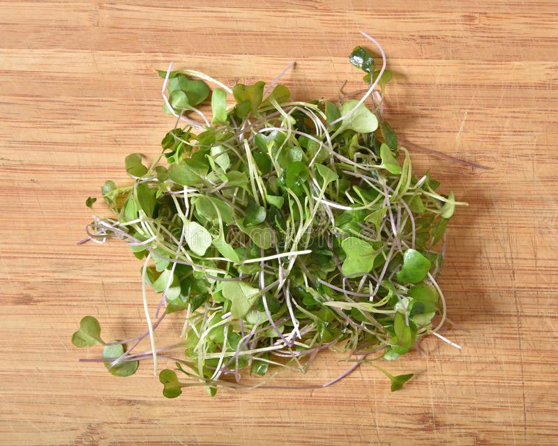 Fresh, organic sprouted micro greens. Overhead view of fresh, sprouted micro greens on a cutting board stock photo
