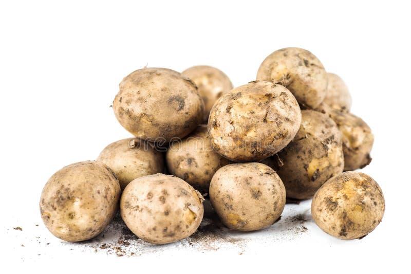 Fresh Organic Swedish New Potatoes royalty free stock images
