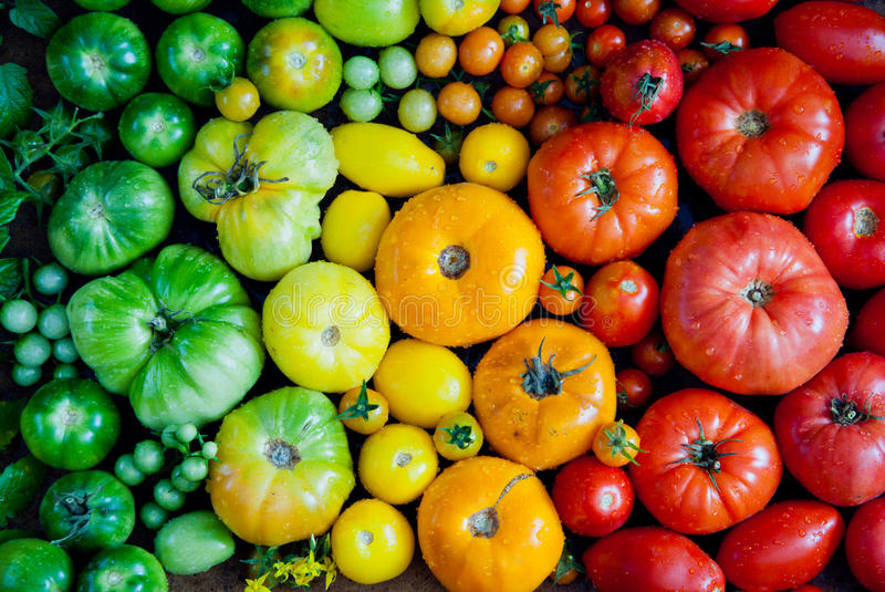 Fresh organic tomatoes stock images