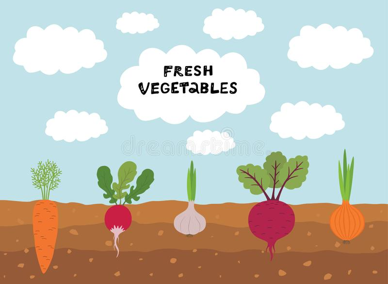 Fresh organic vegetable garden on blue sky background. Set vegetables plant growing underground carrot, onion, garlic stock illustration
