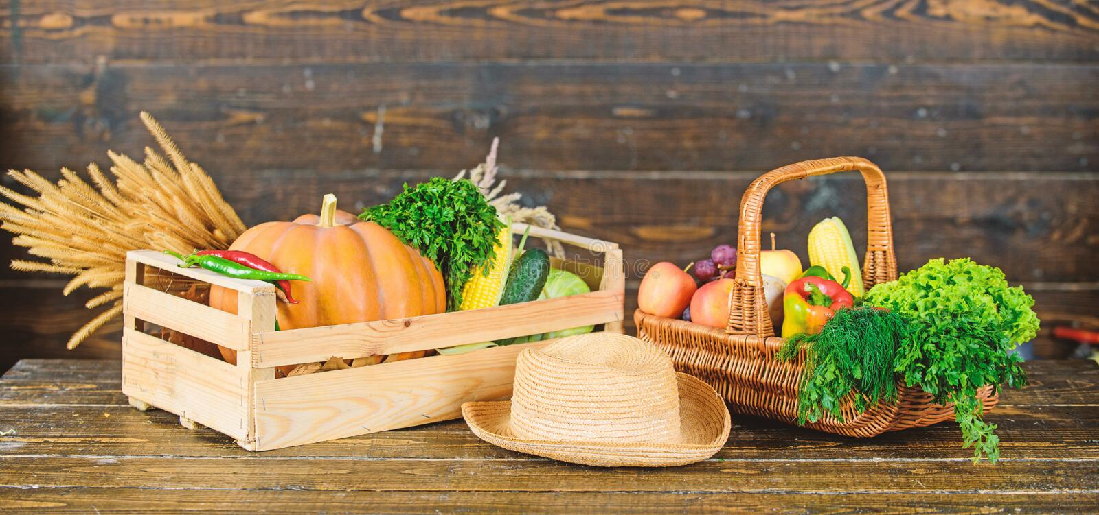 Fresh organic vegetables wicker basket. Fall harvest concept. Autumn harvest crops vegetables. Locally grown natural. Food. Farmers market. Vibrant and colorful stock photos