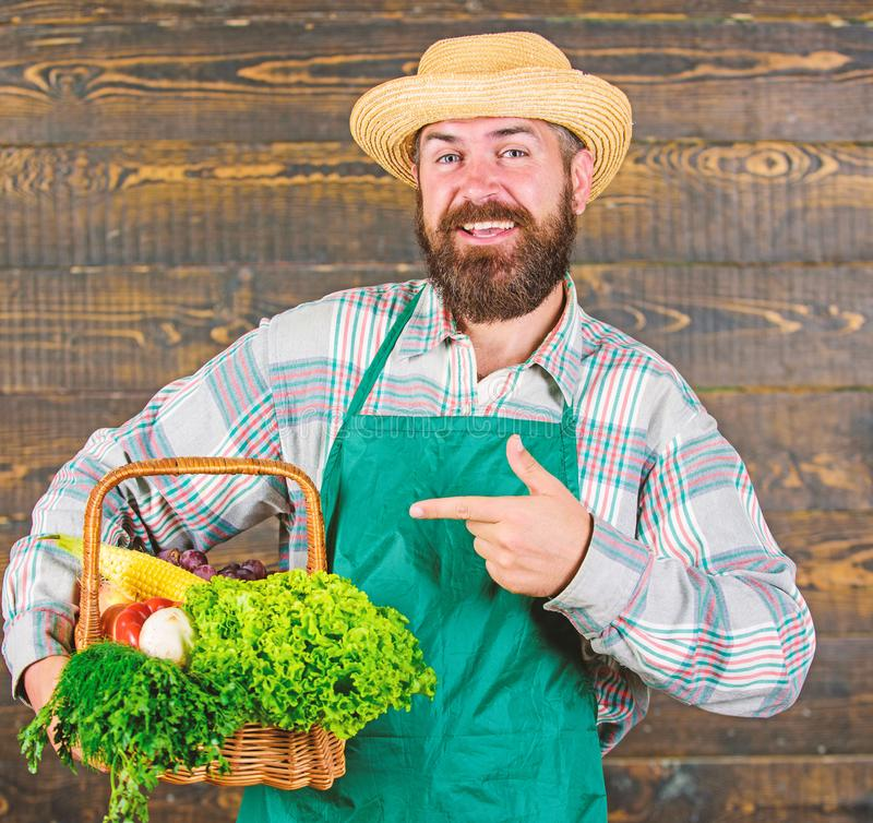 Fresh organic vegetables in wicker basket. Man bearded farmer wear apron presenting vegetables wooden background. Farmer. Hipster straw hat deliver fresh stock images