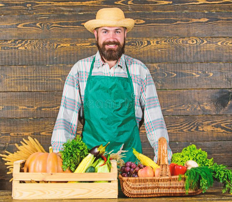Fresh organic vegetables in wicker basket and wooden box. Man cheerful bearded farmer near vegetables wooden background royalty free stock images