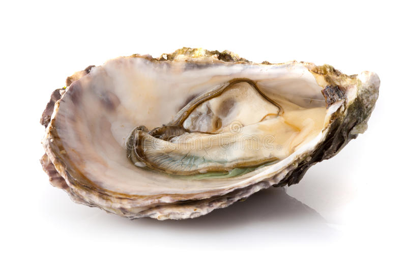 Fresh oyster. On white background