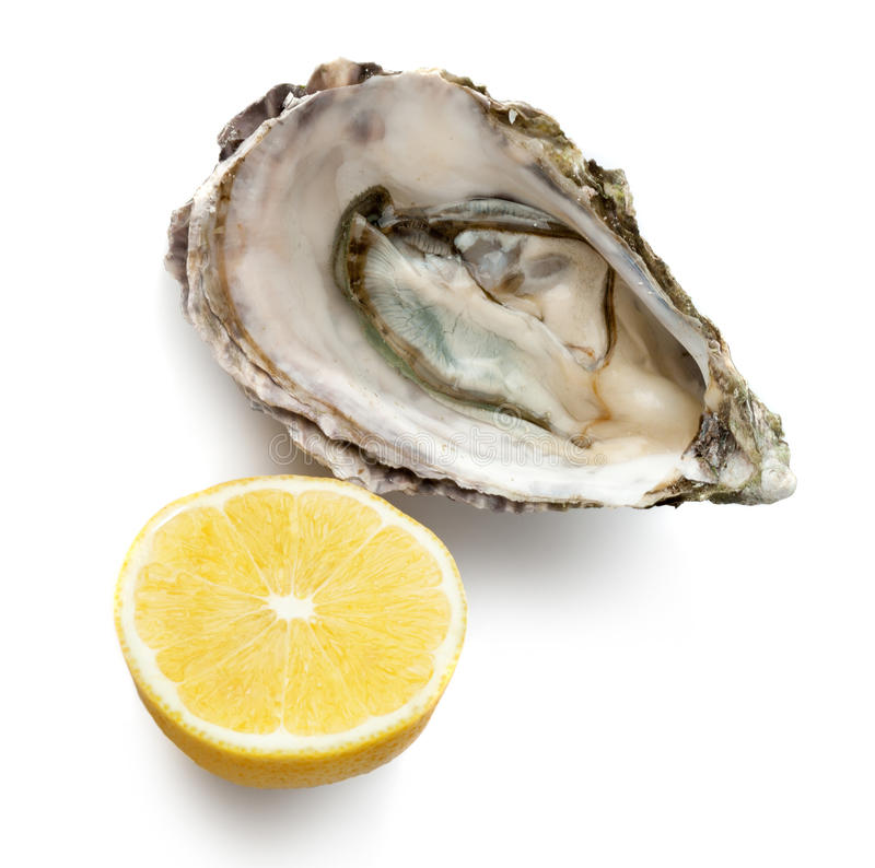 Fresh oyster and half of lemon. Isolated on white background royalty free stock photos