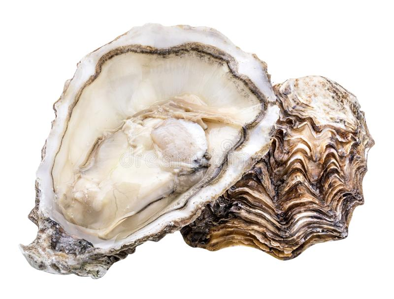 Fresh oyster isolated with shadow. Clipping path. Fresh oyster isolated with shadow on white background. Clipping path stock photography