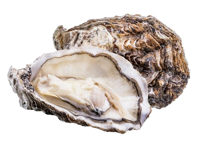 Fresh oyster isolated with shadow on white background. Clipping path royalty free stock photos