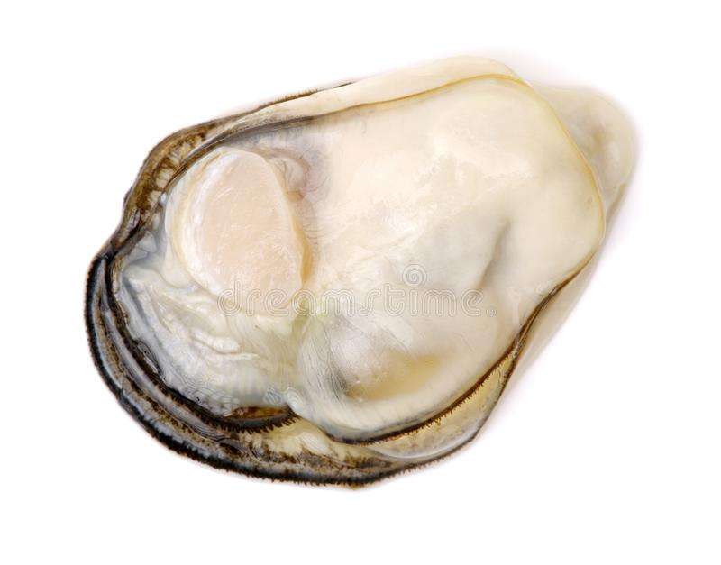 Fresh Oyster Meat royalty free stock images