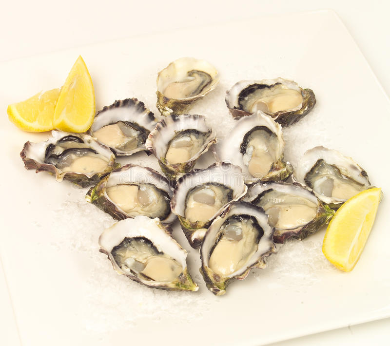 Download Fresh oysters stock photo. Image of salt, shellfish, platter - 25132558