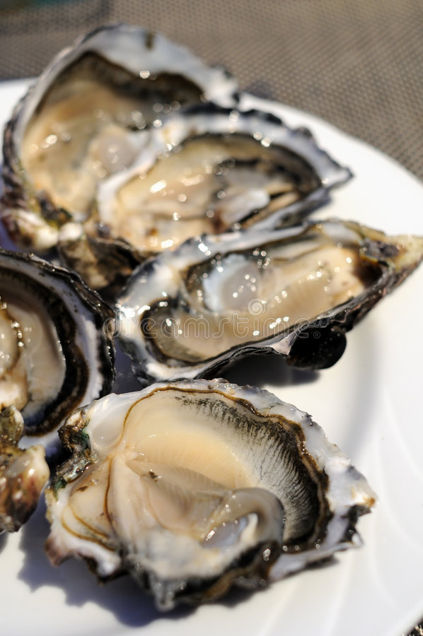 Download Fresh oysters stock photo. Image of delicious, shell, meal - 9114046