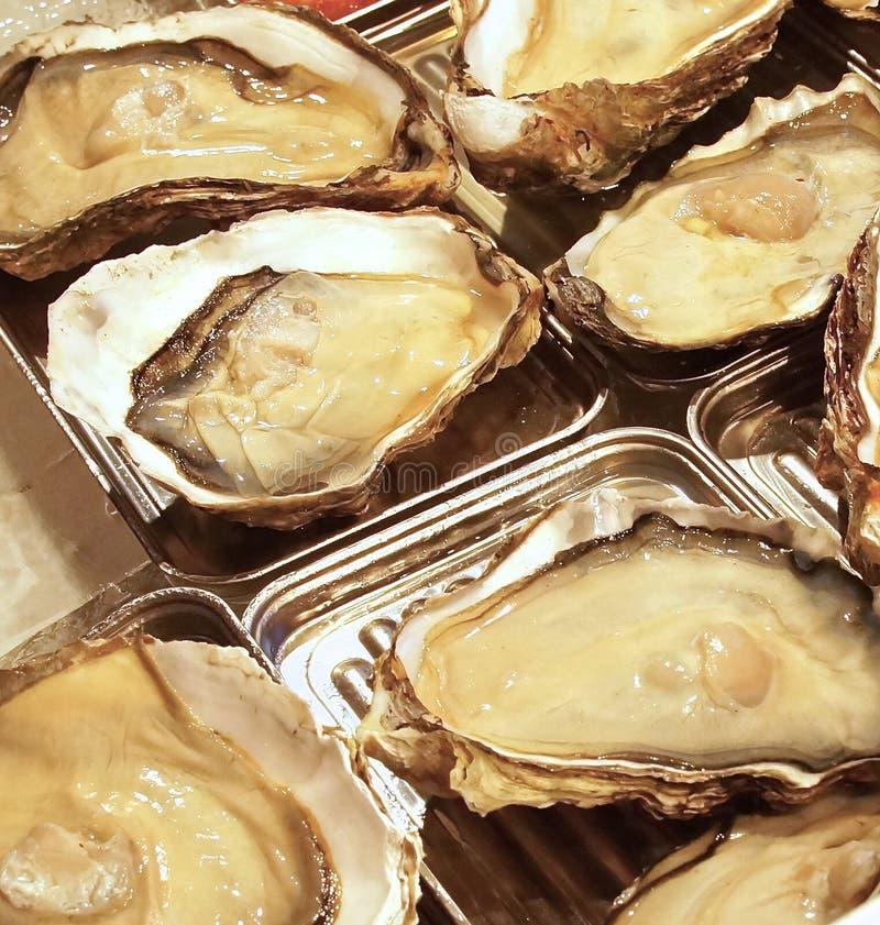 Fresh oysters closeup royalty free stock photos