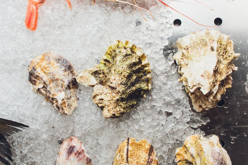 Fresh oysters on ice in the seafood market. royalty free stock images