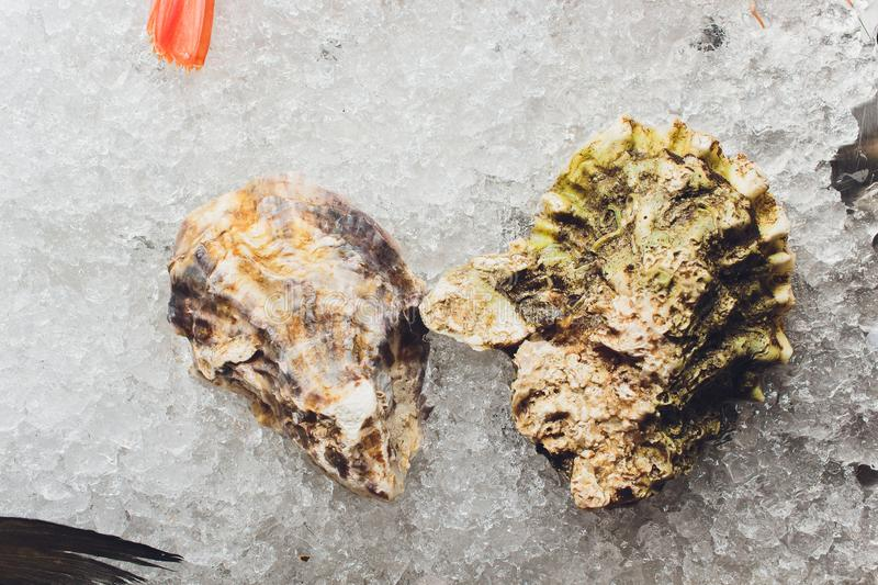 Fresh oysters on ice in the seafood market. stock image