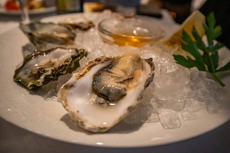 Fresh oysters with lemon slices on ice. Restaurant delicacy, closeup view royalty free stock photos