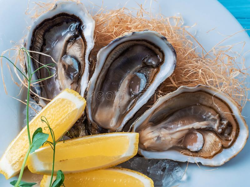 Fresh oysters with lemon on white plate in restaurant stock photos