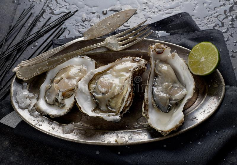 Fresh oysters closeup royalty free stock images
