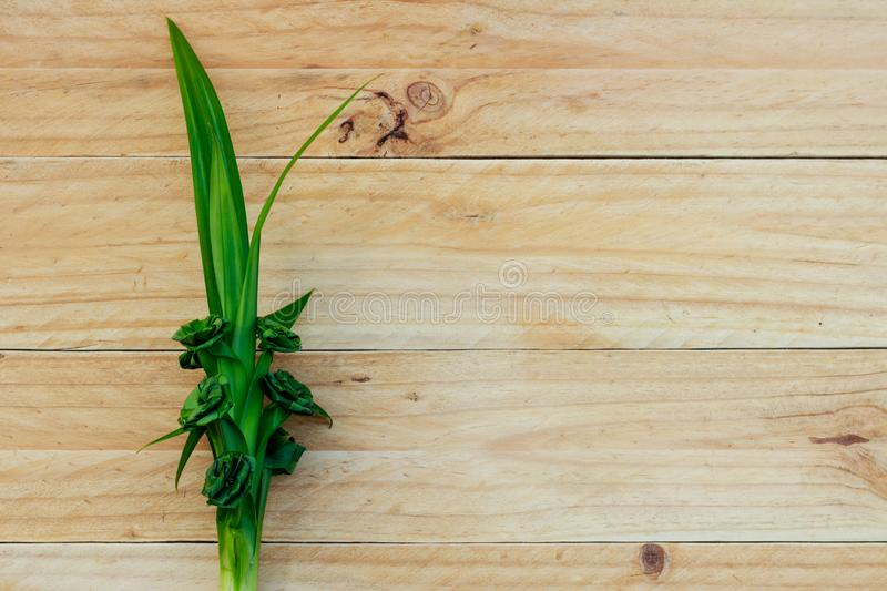 Fresh Pandan leaves isolated on wooden background. Top view stock images