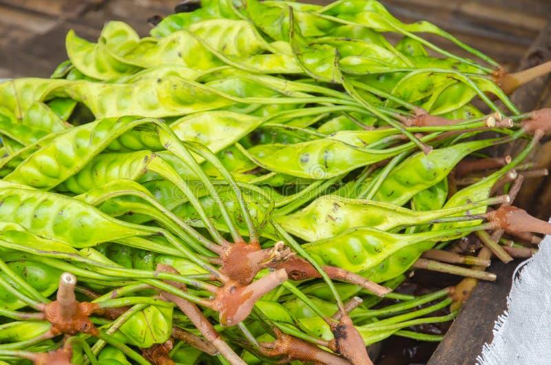 The fresh Parkia is tropical stinking edible beans, Thai style t stock photos