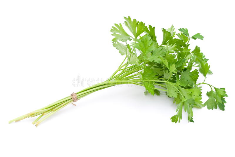 Download Fresh parsley stock image. Image of aromatic, flavor - 15449525