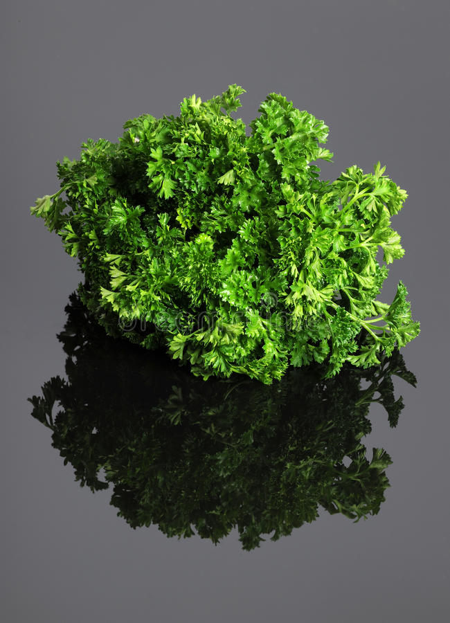 Download Fresh Parsley stock image. Image of isolated, healthy - 17655925