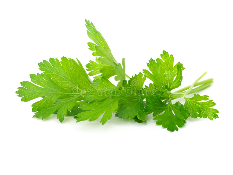 Download Fresh parsley stock photo. Image of cooking, white, health - 18855586