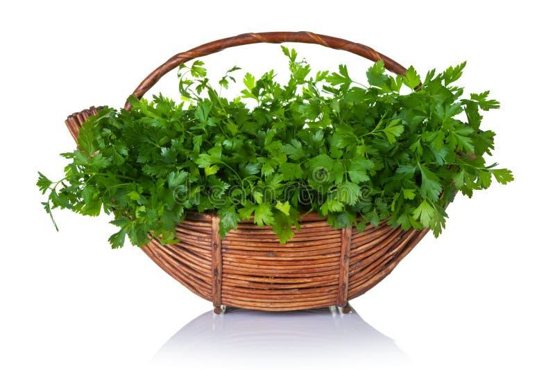 Fresh Parsley. Fresh green parsley bunch in basket on white background stock photos