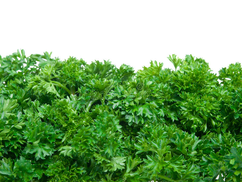 Fresh parsley bunch wallpaper stock images