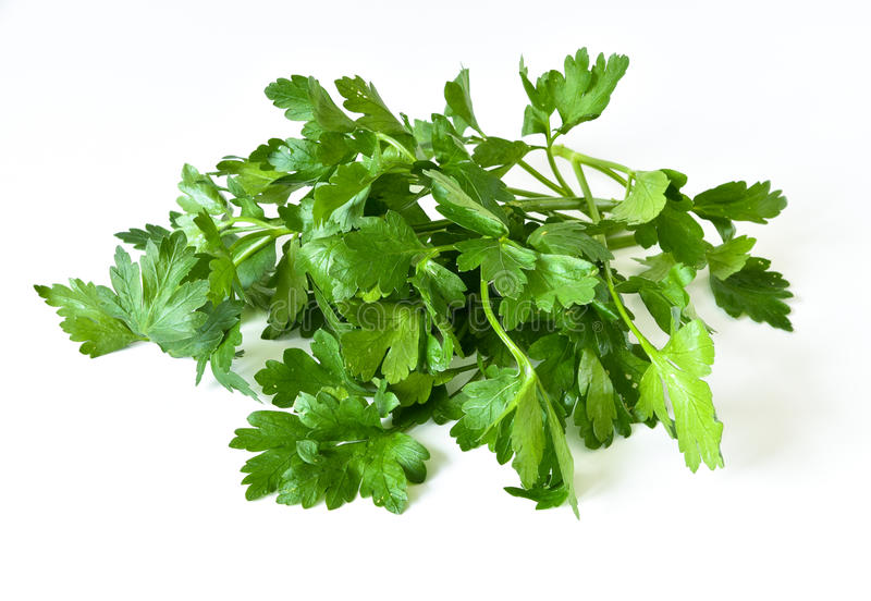 Fresh parsley. Bunch of fresh parsley on a white background stock image