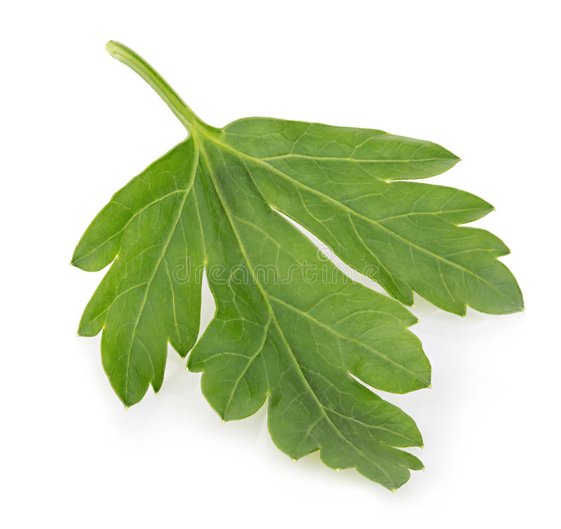 Fresh parsley close-up isolated on a white background. stock photo