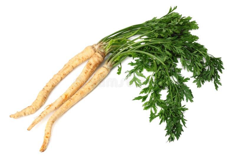 Fresh parsley root isolated on white background stock photos