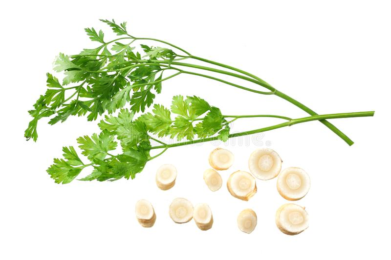 Fresh parsley root isolated on white background. top view stock photos