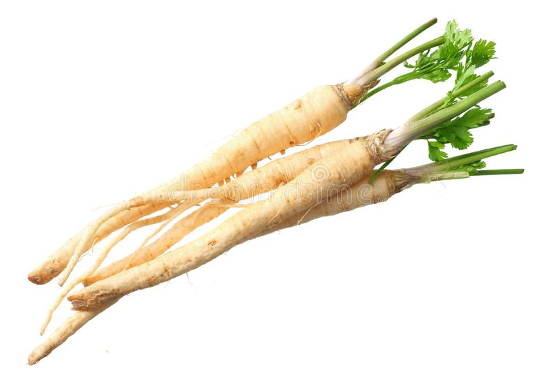Fresh parsley root isolated on white background. top view stock photography