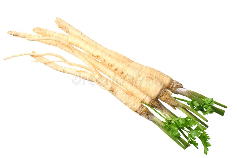 Fresh parsley root isolated on white background. top view royalty free stock image