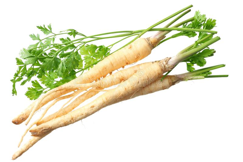 Fresh parsley root isolated on white background. top view stock image