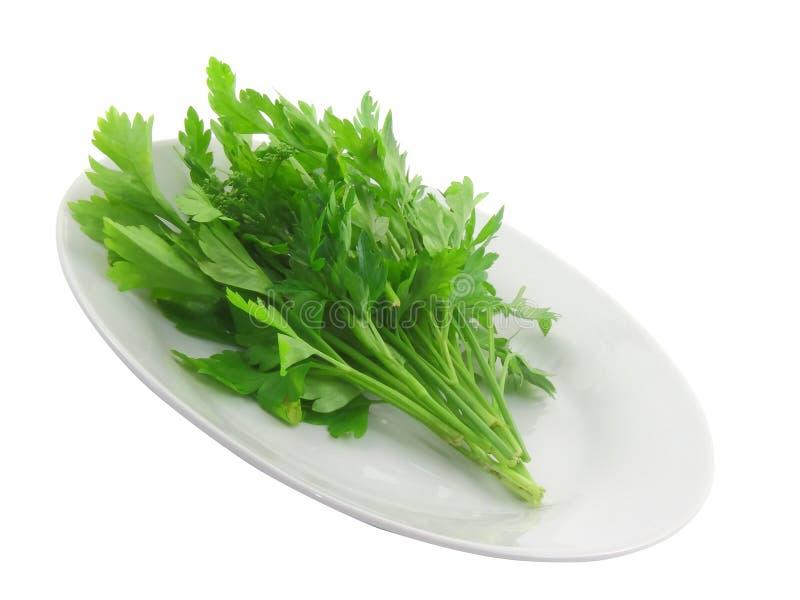 Fresh parsley on white background. Isolated stock image